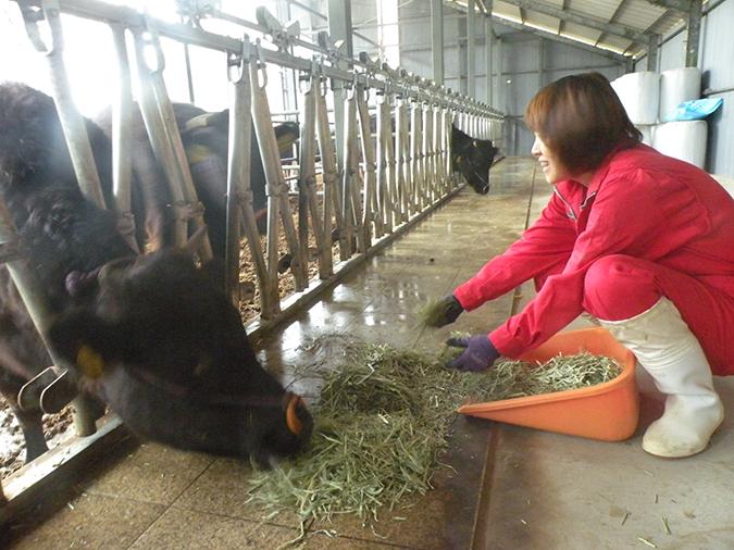 牛舎の奥へ長く、すっきりと伸ばしたエサ場は掃除がしやすく衛生的。牛も全てのエサをきれいに食べきれる作りになっている