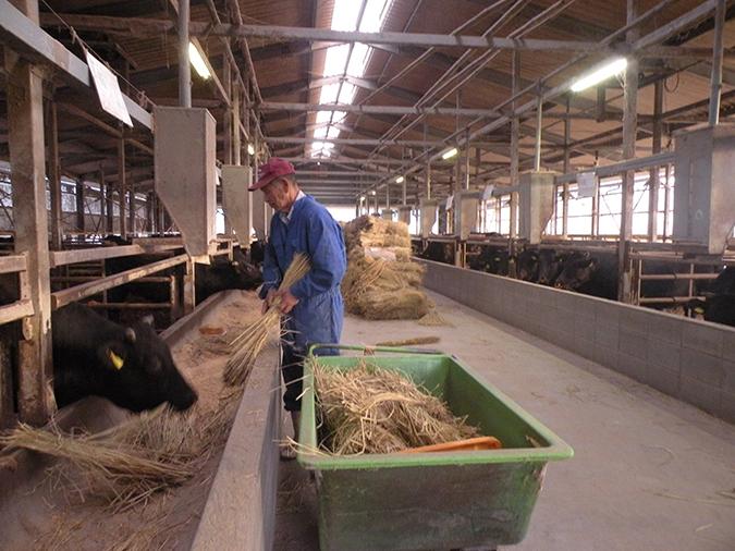 粗飼料としてたっぷり与える稲ワラも自家製米の副産物