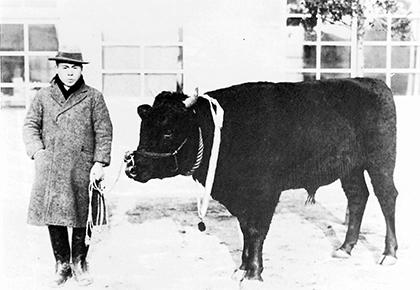 昭和10年には初めて飯田駅前へ種牡牛の「勇号」も到着した(前出の資料「牛のあゆみも50年」より転載)