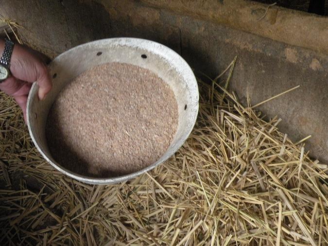 小麦の糠(ぬか)である「ふすま」を毎食、1頭に1杯ずつ余分に与える
